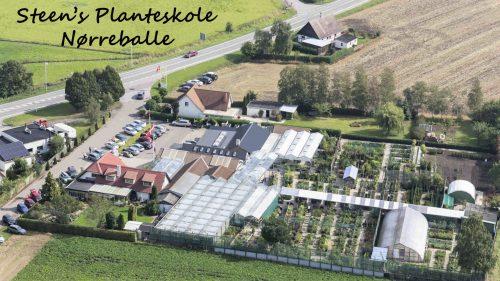 Steen's Planteskole i Nørreballe har sponsoreret de to mammuttræer